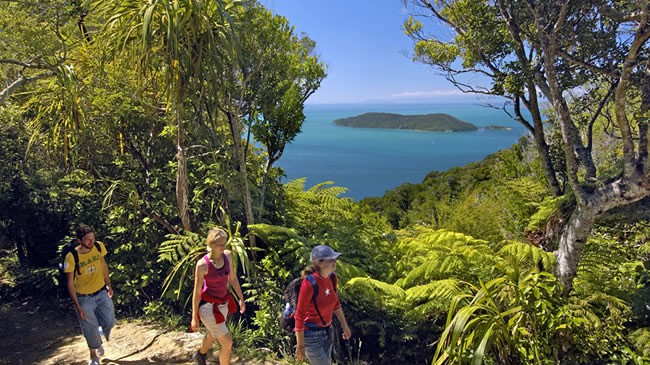 Walk The Queen Charlotte Track Near The Villa Backpackers Lodge In Picton Marlborough NZ